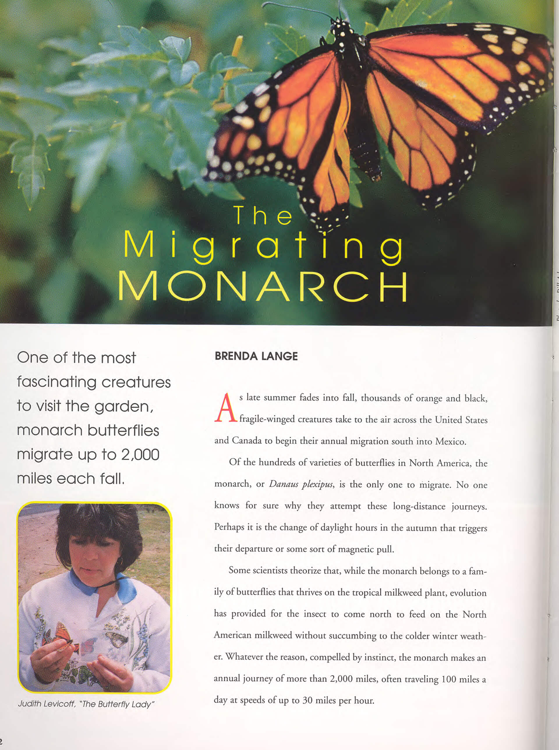 The Migrating Monarch